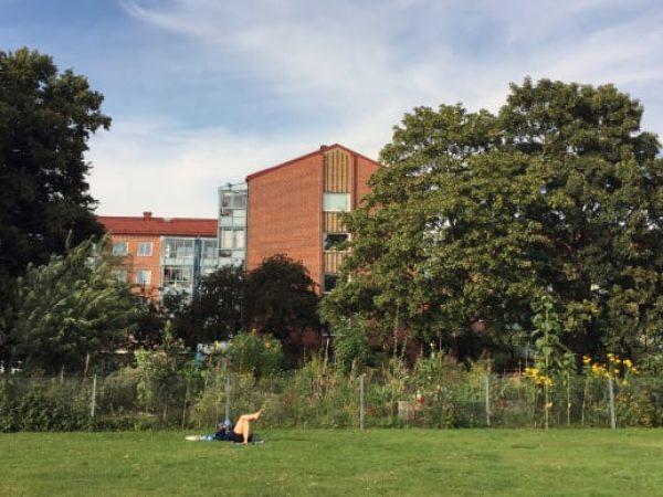 Mer stadsodling i Malmös parker