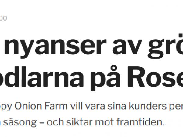 Sydsvenskan: Hundra nyanser av grönt för andelsodlarna på Rosengård